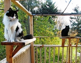 A Quot Catio Quot Lets Kitties Safely Enjoy The Outdoors Canidae 174