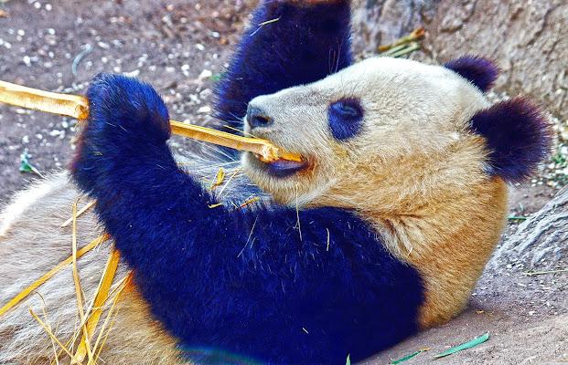 San Diego Zoo, 2920 Zoo Drive, San Diego, CA 92101, United States