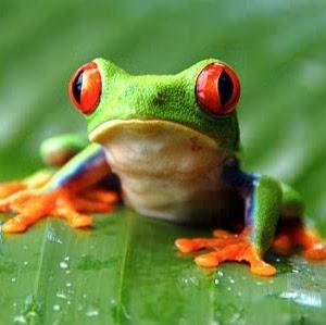 Frogliza