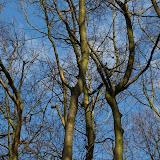 Der Vogelgesang ist gut zu hören und dann beginnt das Suchspiel in den Baumkronen