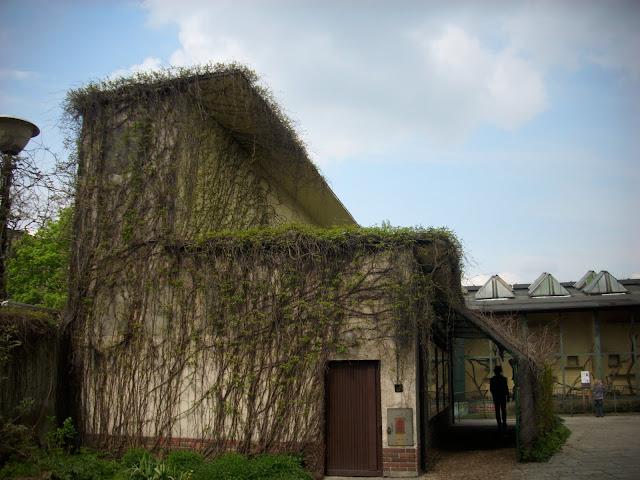 Tu mieszkają smoki z Komodo