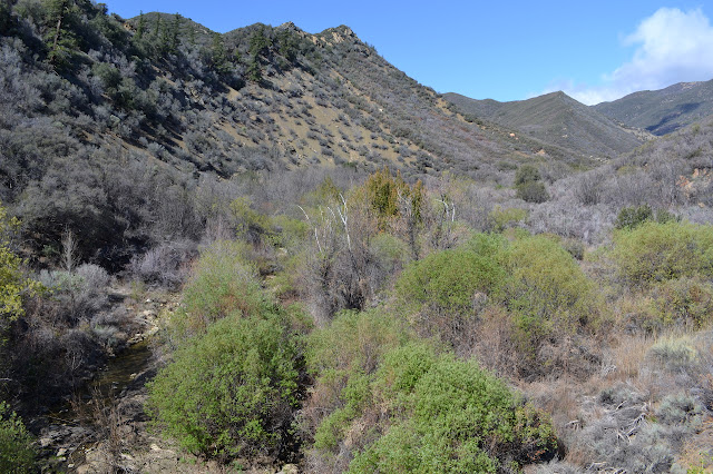 looking up the stretch of Tule Creek