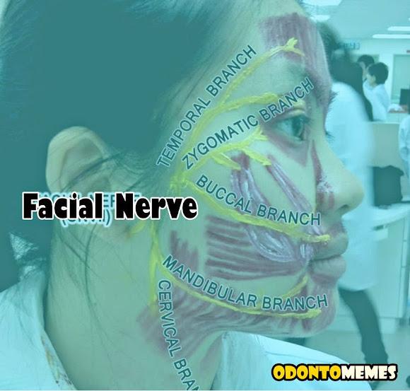 facial-nerve