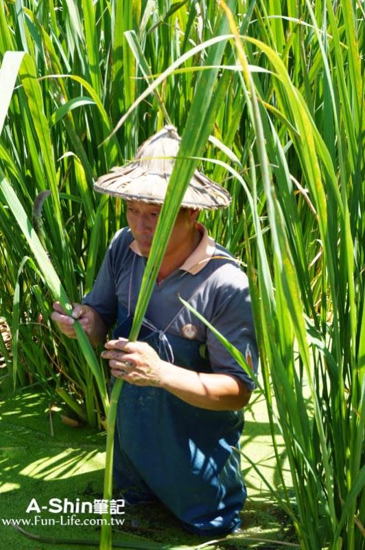 桃米休閒農業區13