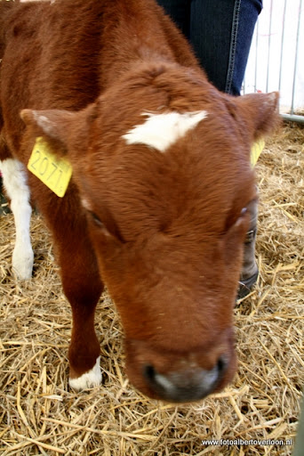 nk Maasheggenvlechten Oeffelt 11-03-2012 (46).JPG