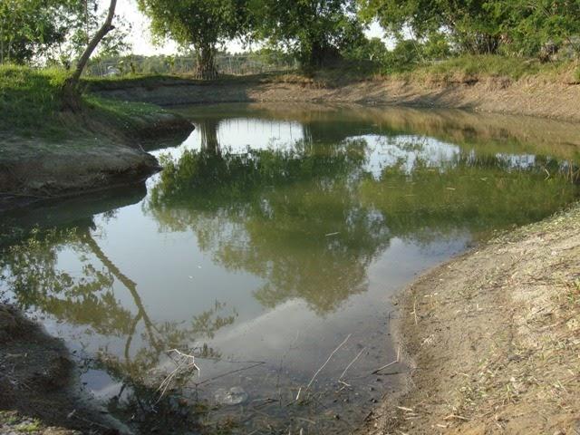 Pensionado In The Philippines Fish Pond