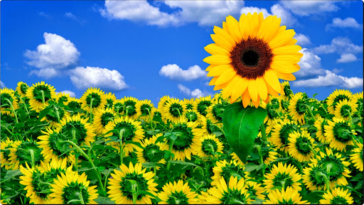 A Little Sunshine to Brighten Your Day.jpg
