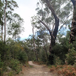 Track towards Lane Cove River (79831)