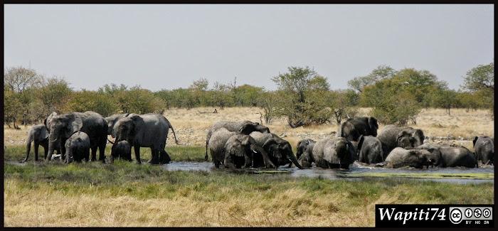 Balade australe... 11 jours en Namibie IMG_0385