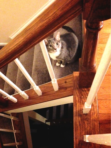 looking cute cat on stairs