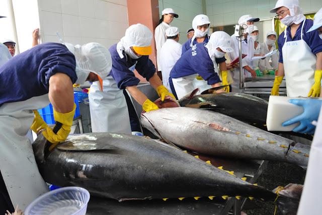 Đơn hàng chế biến thủy sản cần 9 nam làm việc tại Ibaraki Nhật Bản tháng 09/2017