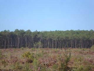 Deforestation photo in Valado dos Frades - Nazare