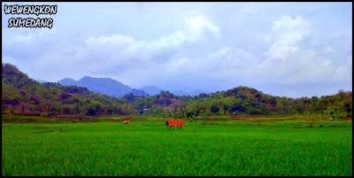 Nikmat Tuhan di Hijaunya Desa Wado