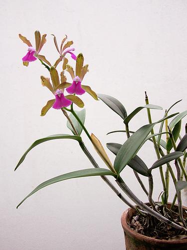 Растения из Тюмени. Краткий обзор - Страница 2 455730983_bec31c1dac