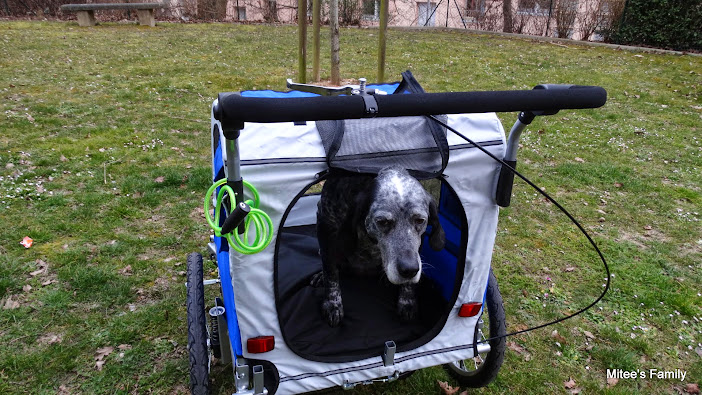 Modes de transport pour petits / vieux chiens qui fatiguent vite - Page 3 DSC02418