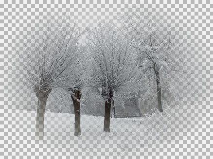 KS_Snow trees.jpg
