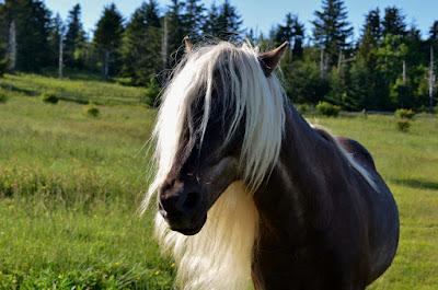 Fabio Pony