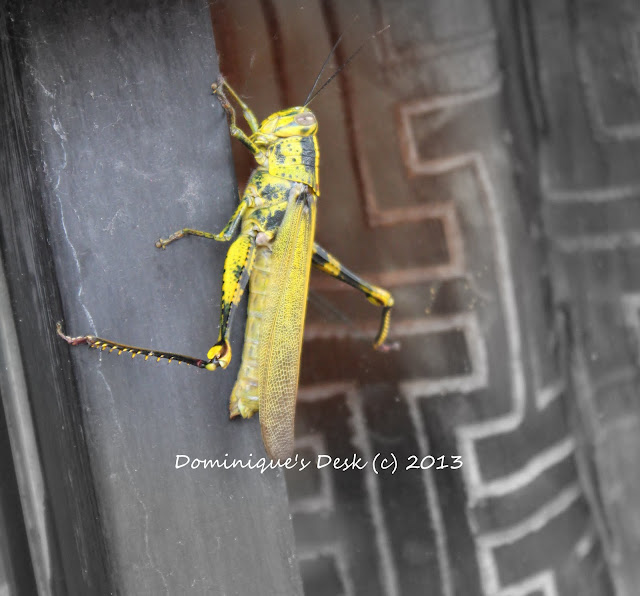 A yellow grashopper
