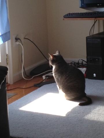 cat watching window