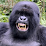 Silverback Attorney's profile photo