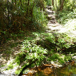 Crossign Myron Brook (381998)