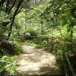 Following the creek (9656)