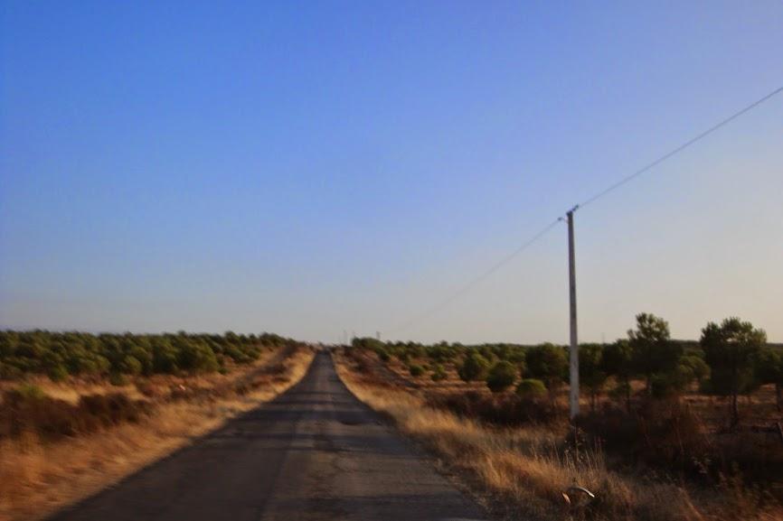 De Alcobaça ao ALLgarve são 590 Kms... DSC07557