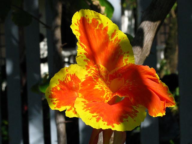Из зимы в лето. Филиппины 2011 - Страница 7 IMG_0039%252520%2525286%252529