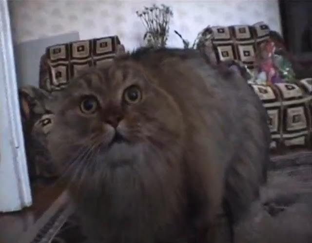 【動画】 猫「ねるねるねるねー!」と謎の言葉をしゃべり続けてるのでネコ語の分かる人ちょっと来い