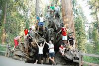 narodni park Sequoia