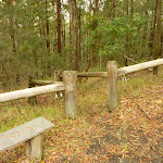 Start to Muirs Walking Track near Cooranbong (320045)