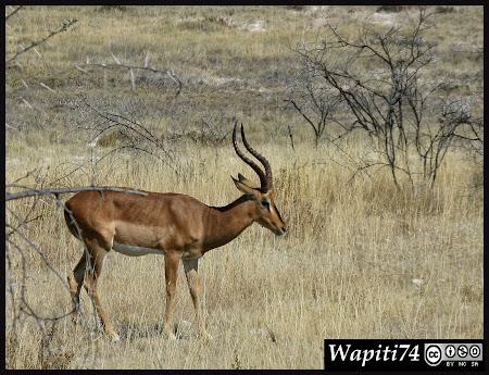 Balade australe... 11 jours en Namibie IMG_0368