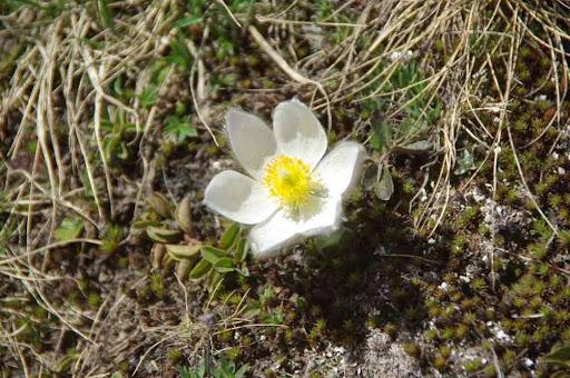 Petite fleur printannière