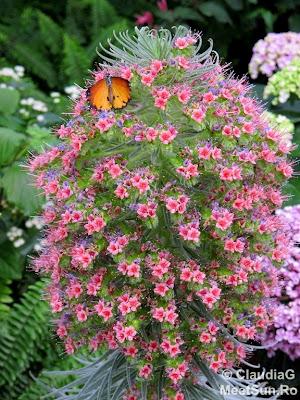 gradina botanica - fluturi si flori