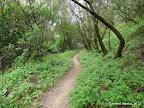 Shady Canyon Trail