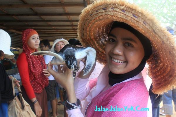 Bali Tempat Penangkaran Penyu Di Indonesia