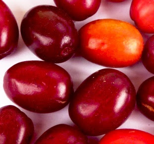 Dereń jadalny owoc