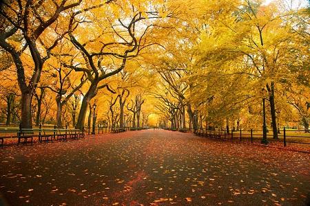 Những bài thơ tàn Thu, tình yêu cuối mùa thu hay nhất