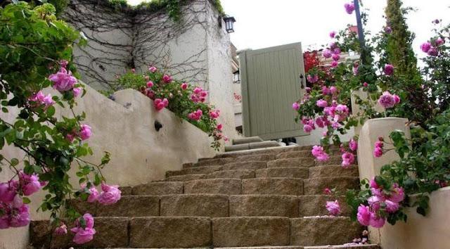 Lối đi được trang trí bằng hồng ngoại Bishop's Castle rose . Nguồn ảnh: sưu tầm