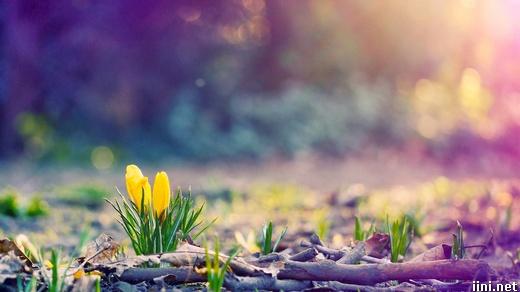 ảnh hoa cỏ sinh sôi khi xuân đến