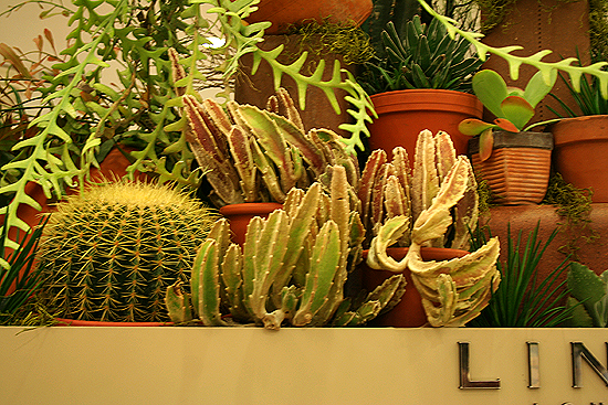 Stapelia, Golden Barrel Cactus, Macy's Flower Show