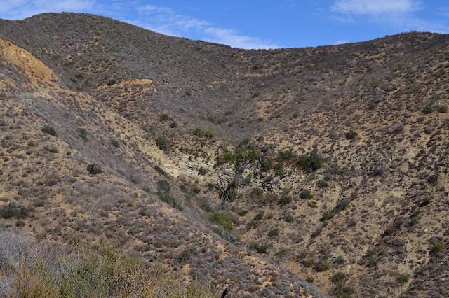 road and vegetation