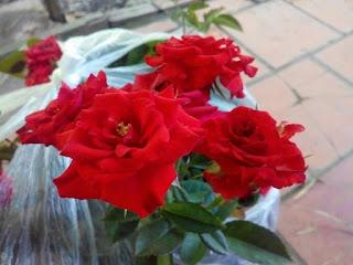 Hình dáng form hoa hồng chùm son đỏ Sa Đéc