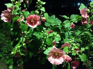 上野公園のお花