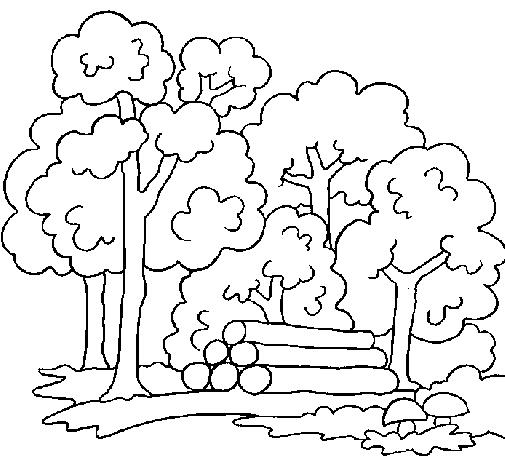 Deforestacion para colorear - Imagui