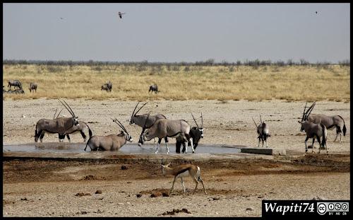 Balade australe... 11 jours en Namibie IMG_0429