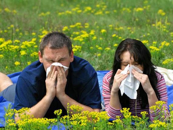 Información a través de mensajes SMS de niveles de polen