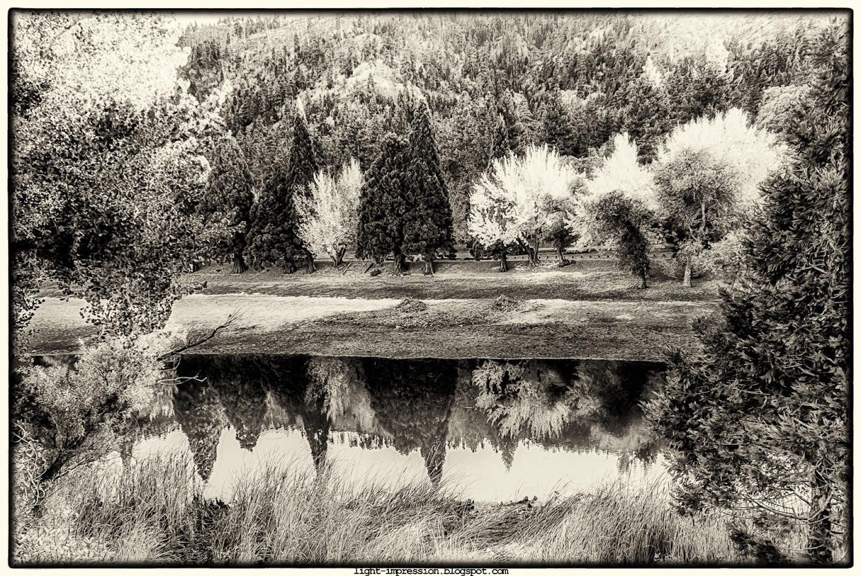 Landscape photography, Sepia, Jackson Lake California, Trees, water, reflections, travel, fishing spot by Wrightwood