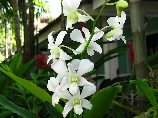 Из зимы в лето. Филиппины 2011 - Страница 7 IMG_0032%252520%2525286%252529