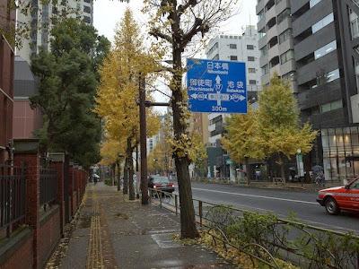 本郷通の銀杏並木の通り